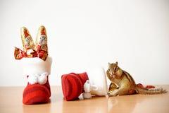 Siberische eekhoorn Royalty-vrije Stock Foto