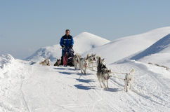 Siberische schor sleddog in Alpen Nockberge -nockberge-longtrail stock fotografie