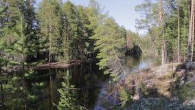 Siberische taigarivier stock video
