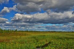 The Sibirian open space. An open swampy summer landscape in the center of Western Siberia near Kogalym Royalty Free Stock Images