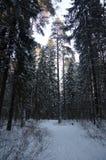 sibirien Lizenzfreie Stockfotografie