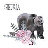 sibirien Der Bär ist braun Getrennt auf weißem Hintergrund Lizenzfreie Stockfotos