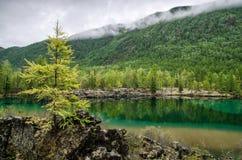 sibirien Schöner grüner Nebelsee im Wald Burjatien stockfotografie