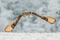Sibirier Eagle Owl Lizenzfreies Stockbild