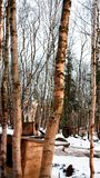Sibirisch heraus kam Frischluft stockfotografie