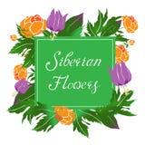 Sibirische Blumenvektorillustration mit einem Rahmen Stockfoto