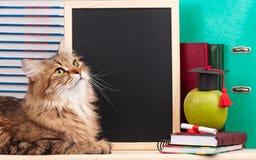 Sibirische Katze Lizenzfreie Stockfotos