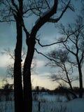 Sibirische Landschaft mit Bäumen und Wolken Stockfoto