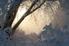 Sibirischer gefrorener Sonnenaufgang Stockbilder