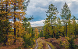 Sibirischer Herbst Lizenzfreies Stockfoto