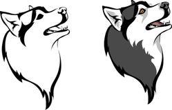 Sibirischer Husky Lizenzfreie Stockfotos
