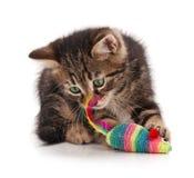 Sibirisches Kätzchen Lizenzfreies Stockbild