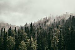 Sibirisches taiga Stockfotografie
