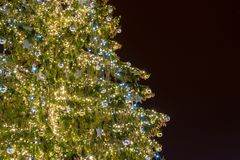 Sibiu 2017 Kerstboom met exemplaarruimte op recht, Transsylvanië Royalty-vrije Stock Foto