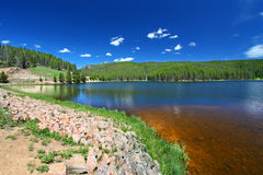 Sibley bighorn Jeziorny las państwowy fotografia royalty free