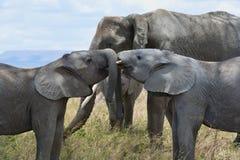 Siblings play in the Serengeti royalty free stock images