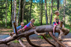 Siblings climbing on a big log in a forest royalty free stock images