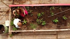 Siblings die in de tuin 4k planten stock videobeelden