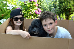 Siblings and dog stock photos