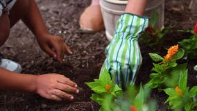 Siblings gardening and planting flowers in garden. Close-up of siblings gardening and planting flowers in garden stock video footage