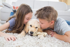 Siblings kissing puppy on rug Stock Photo