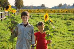 Siblings  in the meadow  bringing sunflowers home royalty free stock photo