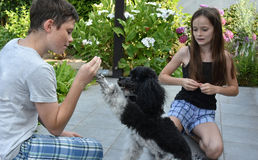 Siblings train their dog Stock Image