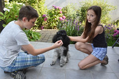 Siblings train their dog. Siblings train their  little harlequin poodle to wear sunglasses e Stock Images