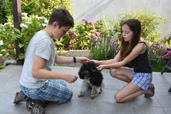 Siblings train their dog Royalty Free Stock Photography