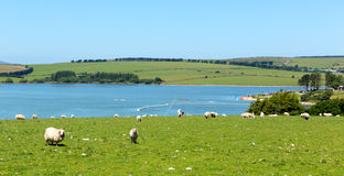 Siblyback Lake Liskeard Bodmin Moor Cornwall England UK Royalty Free Stock Photo
