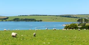 Siblyback sjöLiskeard Bodmin hed Cornwall England UK royaltyfri foto