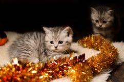 Sibs dei gattini con le decorazioni di natale Fotografia Stock