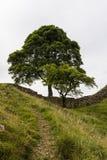Sicómoro Gap en Roman Wall Northumberland, Inglaterra Foto de archivo