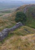 Sicómoro Gap en Roman Wall Northumberland, Inglaterra Fotografía de archivo