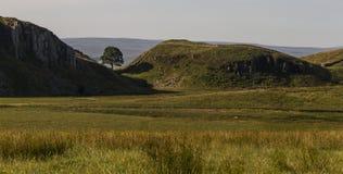 Sicómoro Gap en Roman Wall Northumberland, Inglaterra Imagenes de archivo