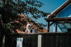 Sic Transilvania Roumanie 09 08 jour du mariage 2018 traditionnel dans le village image libre de droits