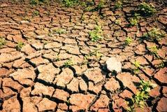 siccità Fotografie Stock