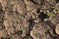 siccità La terra incrinata Struttura Fotografie Stock Libere da Diritti