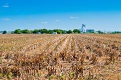 Siccità sull'azienda agricola Fotografia Stock Libera da Diritti