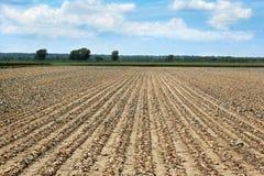 Siccità: I raccolti guasti Fotografia Stock Libera da Diritti