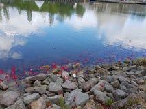 Sich hin- und herbewegende Blüten 2 Lizenzfreie Stockfotografie