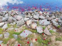Sich hin- und herbewegende Blüten Stockfoto