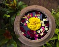 Sich hin- und herbewegende Blume Stockfotografie