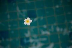 Sich hin- und herbewegende Blume Lizenzfreie Stockfotos