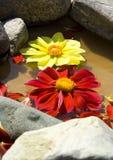 Sich hin- und herbewegende Blumen Lizenzfreies Stockfoto