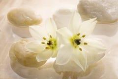 Sich hin- und herbewegende Blumenbadekurortauslegung Stockfoto