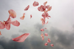 Sich hin- und herbewegende Blumenblätter Stockbilder