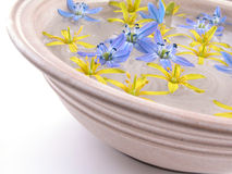 Sich hin- und herbewegende Frühlingsblumen lizenzfreies stockbild