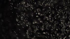Sich hin- und herbewegende kleine Flecke des Staubes funkeln auf schwarzem Hintergrund stock video