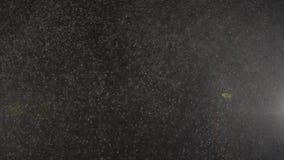 Sich hin- und herbewegende kleine Staubhäschen funkeln auf einem schwarzen Hintergrund stock video footage